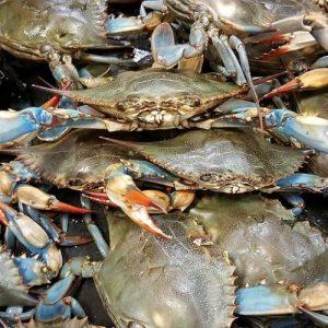 fresh gulf caught blue crabs