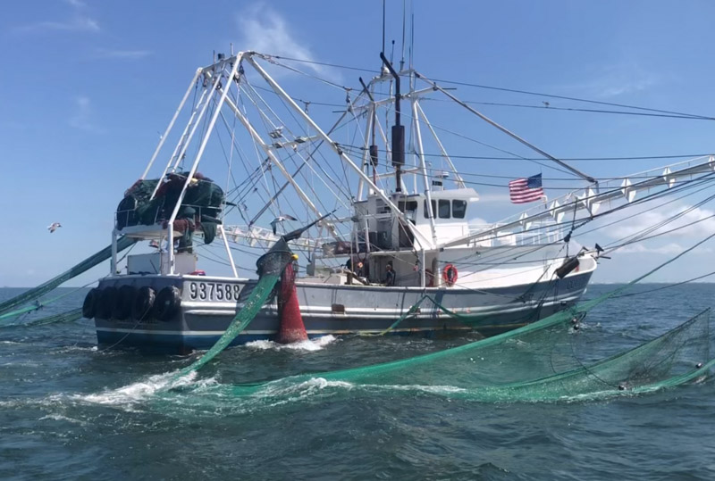 eastern shore seafood sourced from gulf of mexico local fishermen